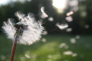 How to Make Your Wish Come True 9 Steps to Manifestation