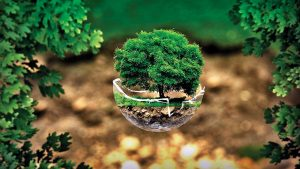 activities to to do on World Environment Day