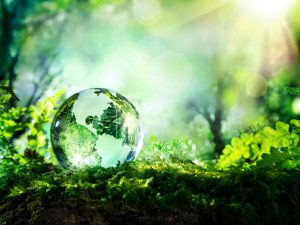 Facts about world environment day